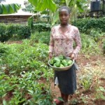 Kisia harvesting green pepper