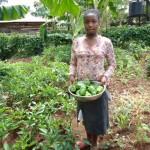 Farming_Kisia with harvesting green pepper